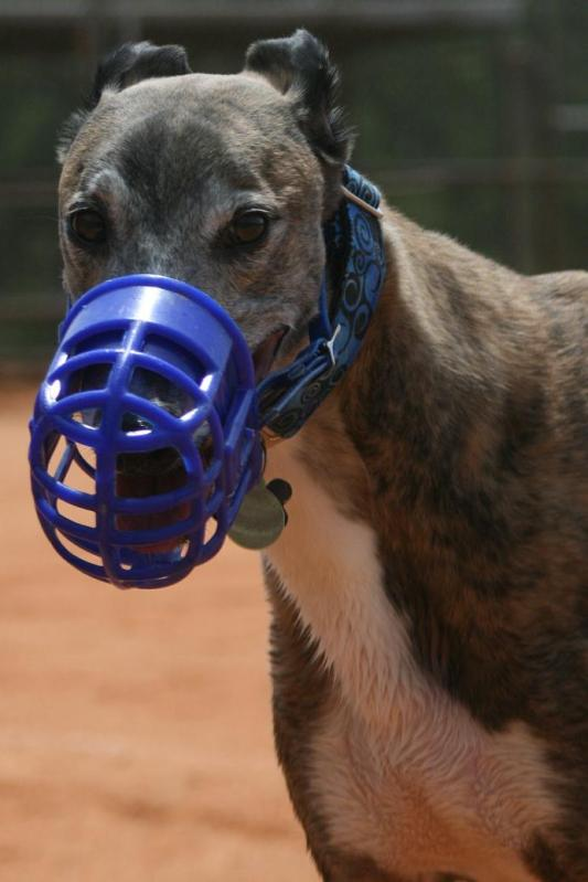Greyhound Crossroads Kennel Muzzle