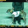 Greyhound_This_Is_Dave-_3big.jpg