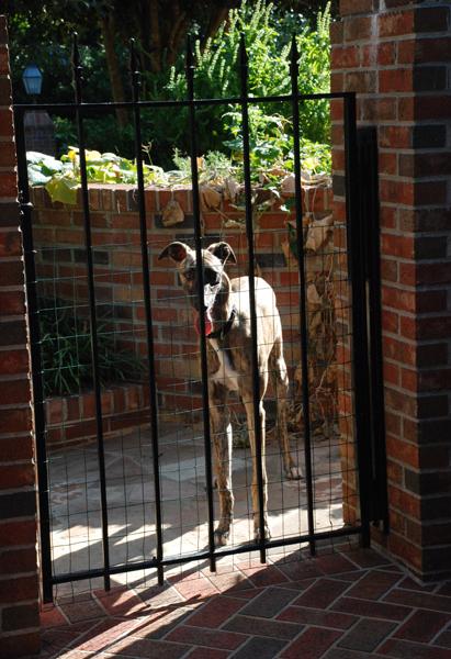 Greyhound Crossroads - Separation Anxiety